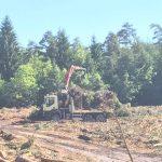 Odkup lesa na panju